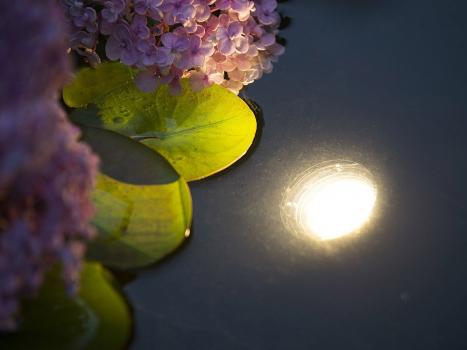 Teich Beleuchtung